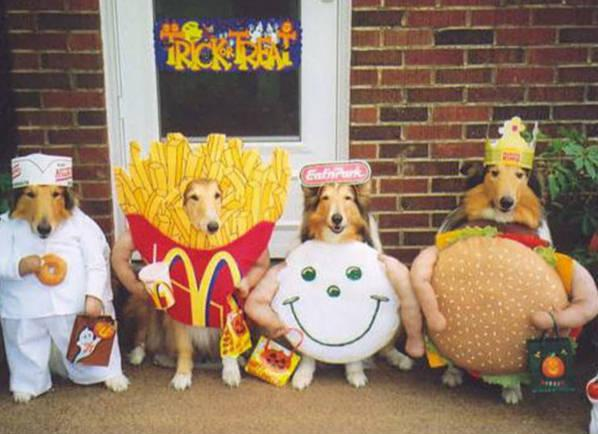 funny-pets-halloween-costumes-dogs-dressed-up-in-fast-food-outfits.jpg